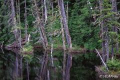 020-Canada-Alaska-Alaska-Hyder_Umgebung