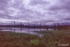 009_Canada-Osten_-_Quebec_-_am_Weg_nach_Norden