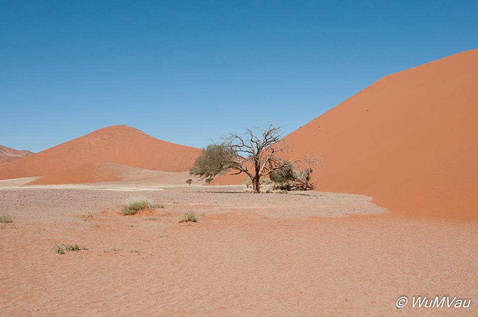 Namib nahe Soussusvlei